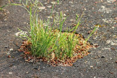 asphalt-3439575_1920