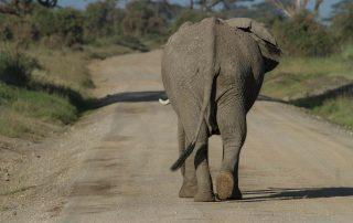 Slon u sobi